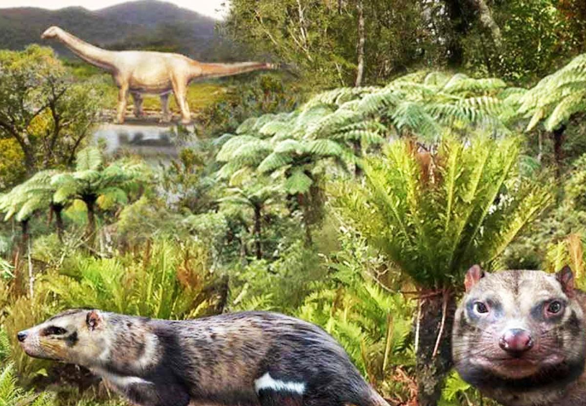 В Чили нашли останки вымершего скунса эпохи динозавров.Вокруг Света. Украина