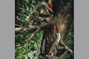 В Китае открыли новый вид птерозавров, лазавших по деревьям