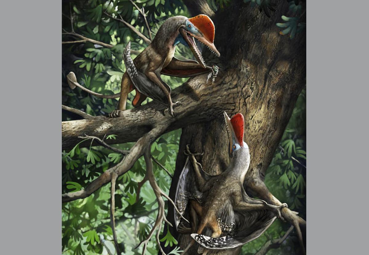 В Китае открыли новый вид птерозавров, лазавших по деревьям.Вокруг Света. Украина