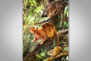 На Филиппинах открыли древних гигантских крыс, обитавших на деревьях