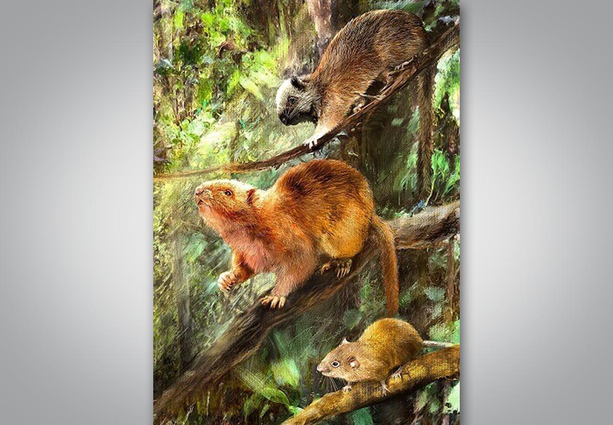 На Филиппинах открыли древних гигантских крыс, обитавших на деревьях.Вокруг Света. Украина