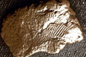 На Оркнеях найден 5000-летний отпечаток пальца гончара