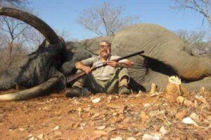 Зимбабве продает права на убийство 500 слонов