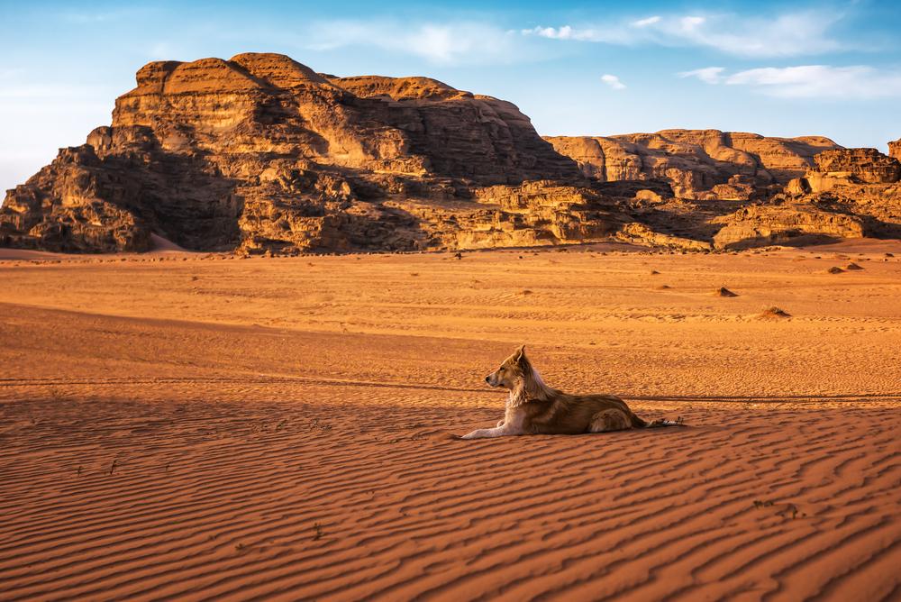 В Саудовской Аравии нашли новые свидетельства древнего одомашнивания собак.Вокруг Света. Украина