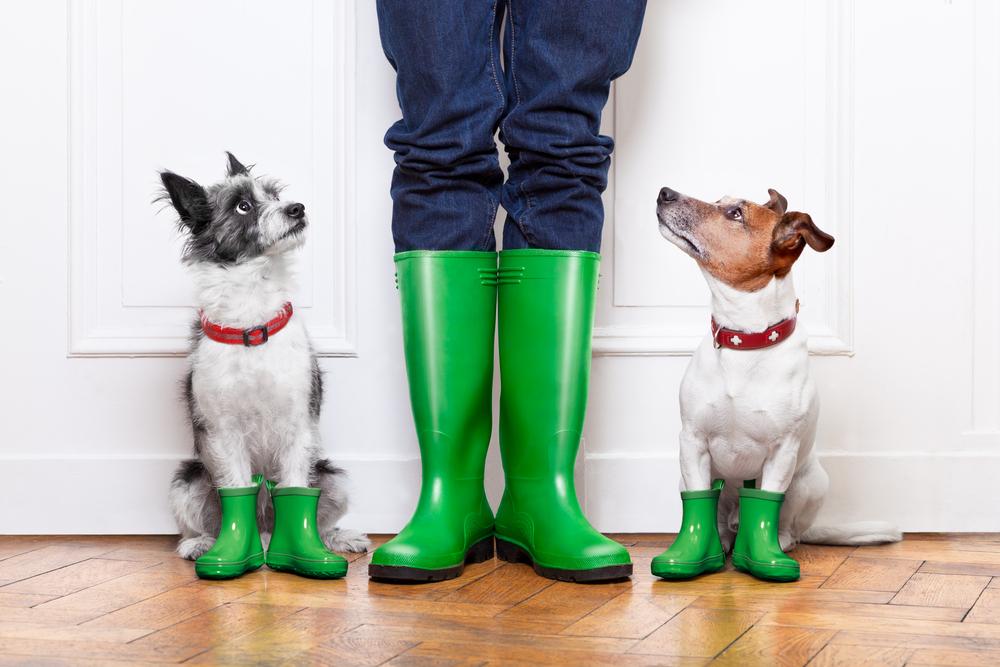Собаки ревнуют хозяина. Даже в фантазиях