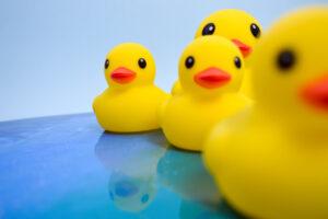 Желтые утята: как потерянные игрушки для ванны помогли уточнить карту морских течений