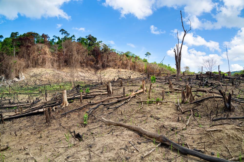 Как вырубка тропических лесов связана с мировой торговлей? Это наглядно показывает новая карта