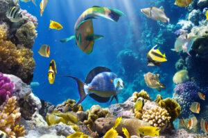Глобальное потепление перемещает морские виды к полюсам