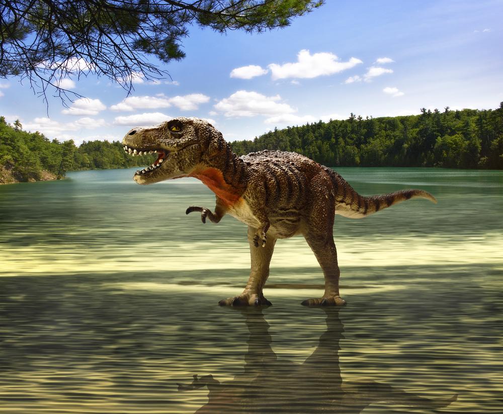 Палеонтологи узнали, сколько тираннозавров ходило по Земле.Вокруг Света. Украина