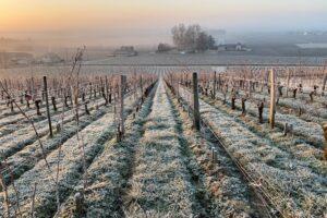 Жара в марте, мороз в апреле: климатический кризис ударил по виноделам Франции