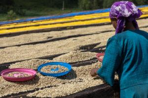 Изменение климата портит вкус кофе