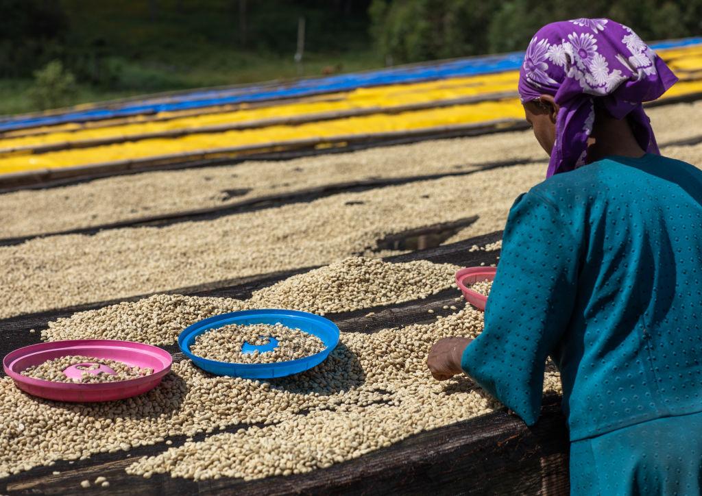 Изменение климата портит вкус кофе.Вокруг Света. Украина