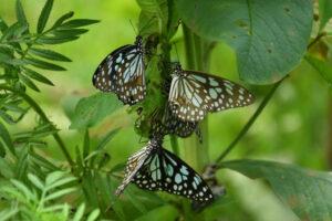 Азотные удобрения уменьшают численность бабочек