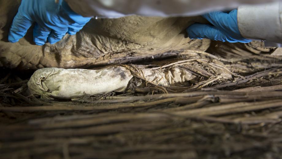 В Швеции раскрыли тайну мумифицированного эмбриона из могилы епископа XVII века