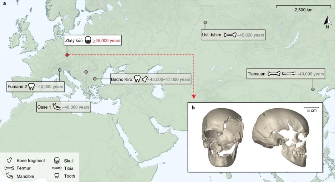 Homo Sapience скрещивались с неандертальцами на протяжении тысячелетий