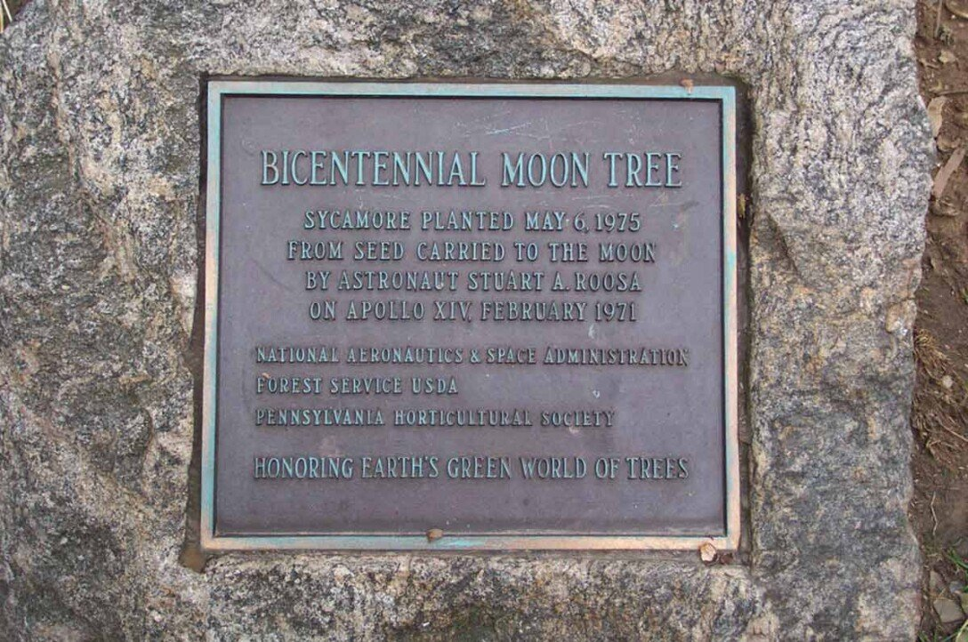 В Великобритании разыскивают деревья, побывавшие в космосе