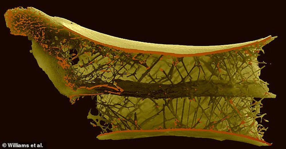 Как птерозавры с очень длинными шеями могли летать, неся тяжелую добычу
