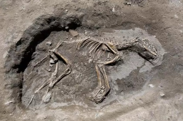 В бронзовом веке жили собаки-вегетарианцы