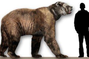 Генетики извлекли ДНК вымерших пещерных медведей из земли