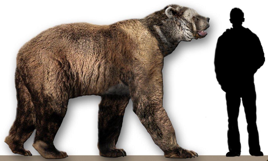 Генетики извлекли ДНК вымерших пещерных медведей из земли.Вокруг Света. Украина