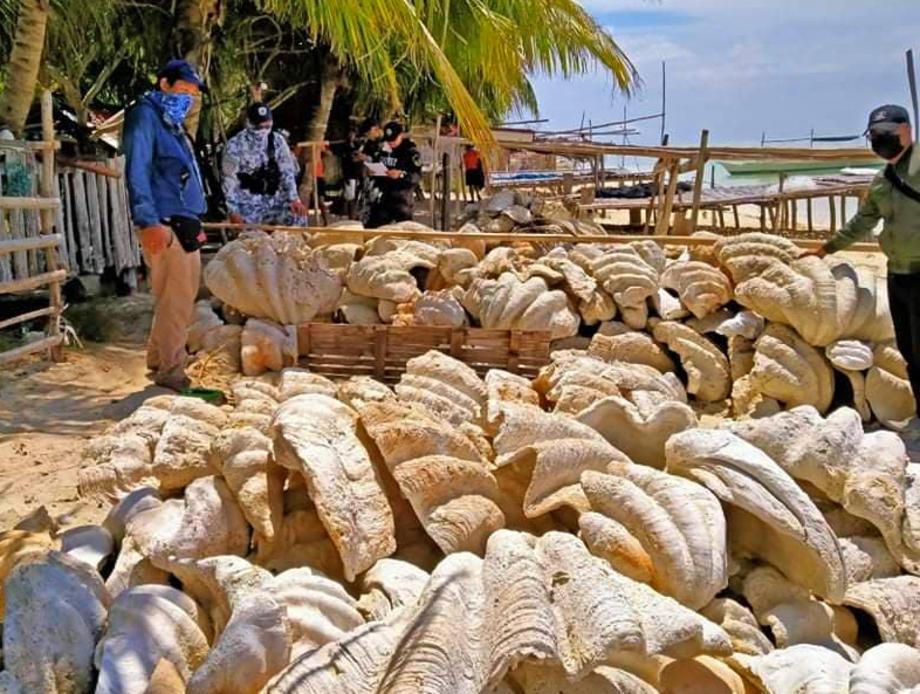 На Филиппинах изъяли раковины гигантских моллюсков на сумму $25 млн.Вокруг Света. Украина