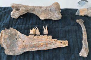 В Лас-Вегасе на дне бассейна нашли кости лошади из ледникового периода