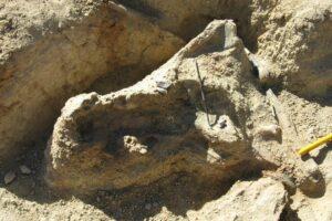 В Австралии нашли череп вымершего крокодила возрастом 8 млн лет