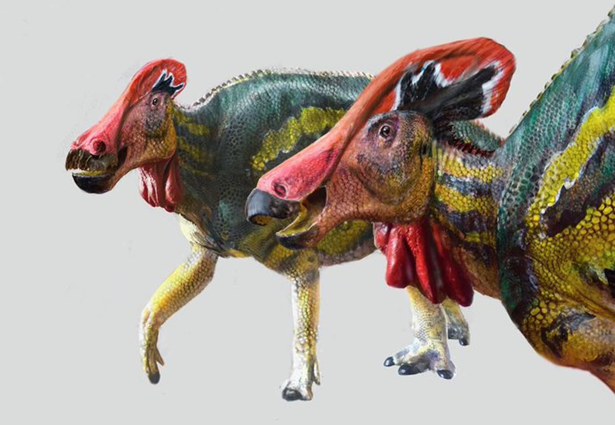 В Мексике открыли новый вид общительного динозавра с красным гребнем