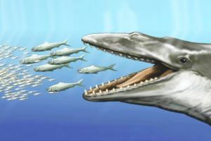 Древние предки китов обладали и зубами, и китовым усом