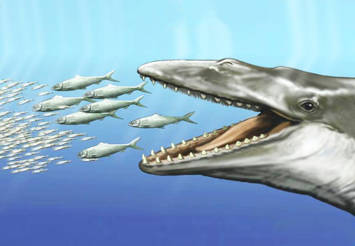 Древние предки китов обладали и зубами, и китовым усом.Вокруг Света. Украина