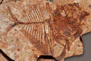 Тропические рыбы отлично адаптировались к древнему глобальному потеплению