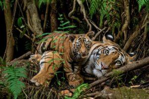 Названы дикие животные обновленной «большой пятерки»