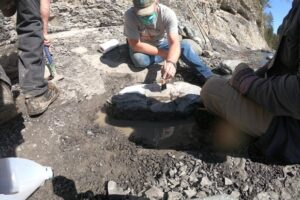 В Канаде отставной сапер нашел панцирь черепахи возрастом 84 млн лет