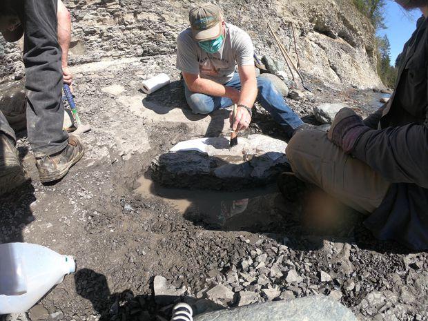 В Канаде отставной сапер нашел панцирь черепахи возрастом 84 млн лет.Вокруг Света. Украина