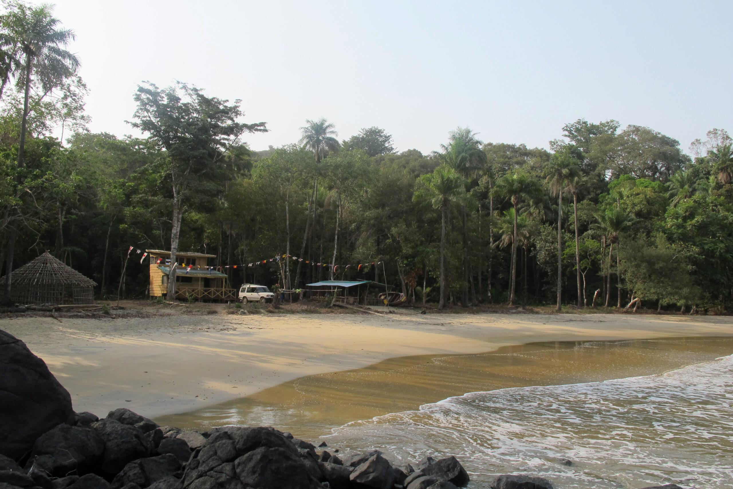 Власти Сьерра-Леоне продали 100 га заповедного леса под застройку