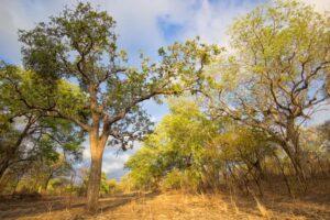 Древние люди в Африке впервые начали выжигать лес около 90 тыс лет назад