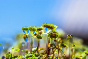 Древние растения вышли на сушу благодаря грибам