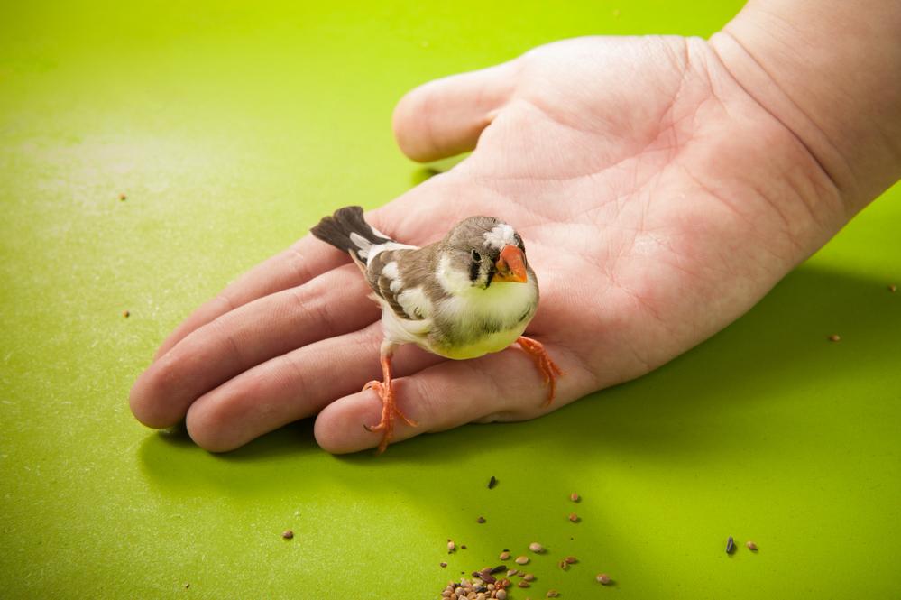 Городской шум лишает певчих птиц репертуара