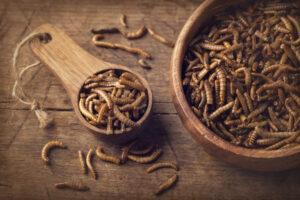 ЕС впервые разрешил употреблять в пищу насекомых