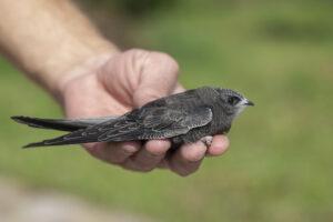 Орнитологи зафиксировали новый рекорд скорости у птиц