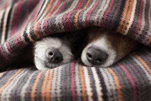 Сколько живут собаки?