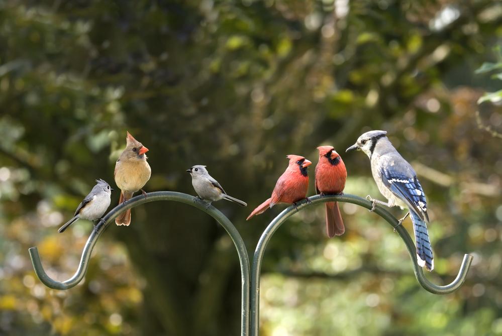 Сколько в мире птиц
