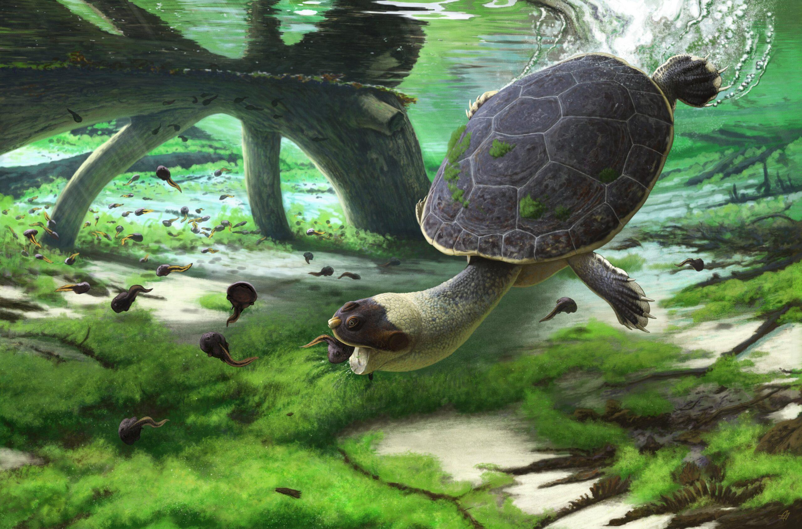 На Мадагаскаре открыли ископаемую «лягушачью» черепаху.Вокруг Света. Украина