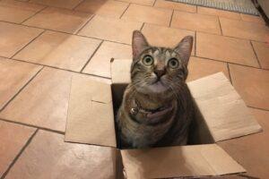 Кошки любят коробки, даже если они нарисованные