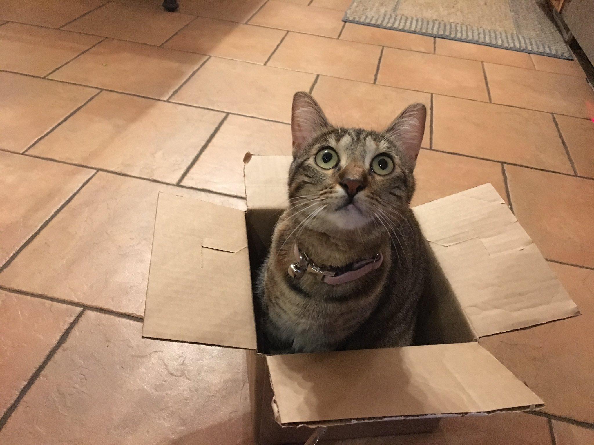 Кошки любят коробки, даже если они нарисованные.Вокруг Света. Украина