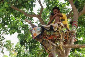 Больной COVID-19 индиец переселился на дерево