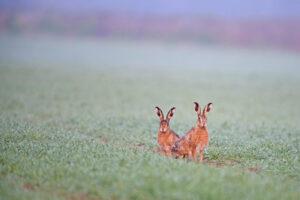 Чем отличаются кролики от зайцев? Если коротко, то всем