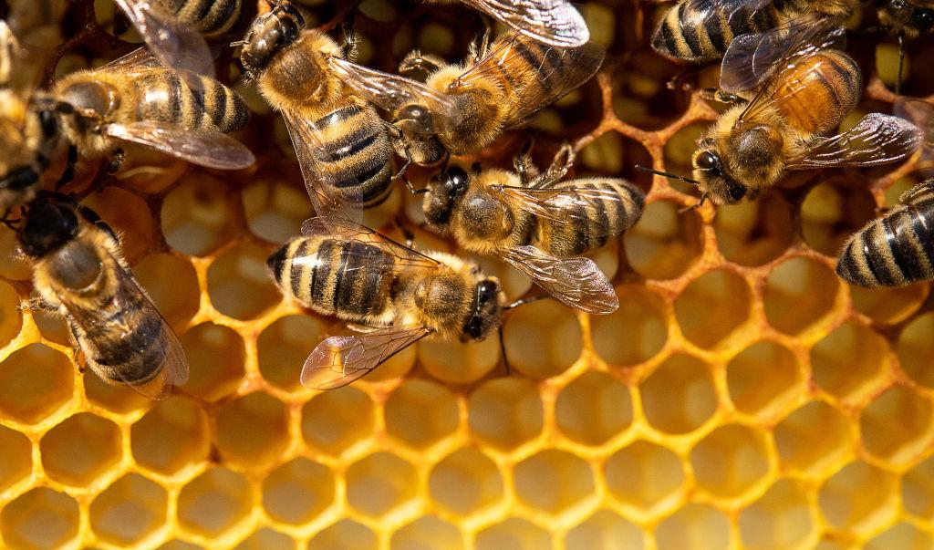 """Это """"жжж"""" неспроста: интересные факты о пчелах.Вокруг Света. Украина"""