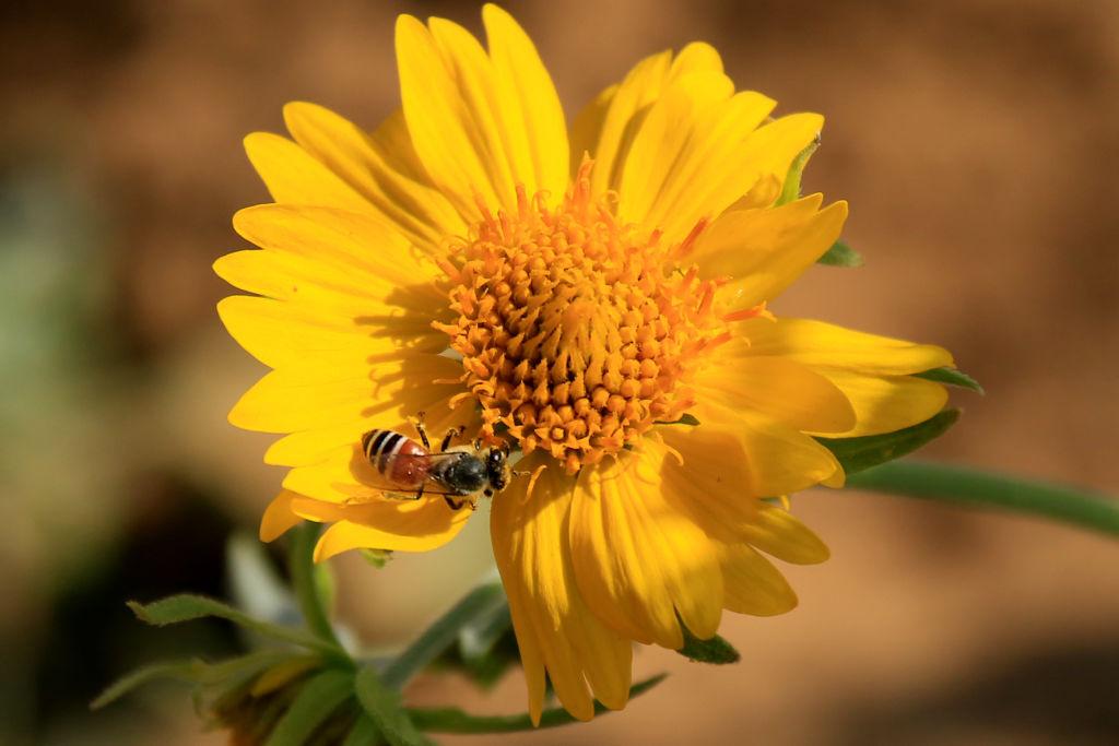 В Нидерландах пчел научили определять COVID-19 по запаху