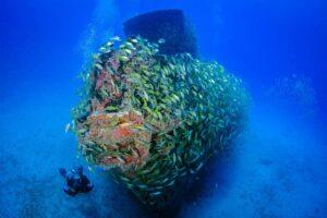 Затонувшие корабли меняют экосистему морского дна